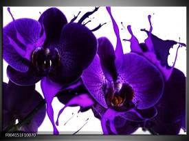 Glas schilderij Orchidee   Paars, Blauw, Wit