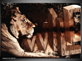 Glas schilderij Leeuw | Bruin, Zwart