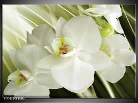 Foto canvas schilderij Orchidee | Groen, Wit