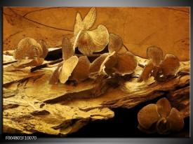Glas schilderij Orchidee   Bruin