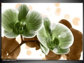 Foto canvas schilderij Orchidee   Groen, Bruin