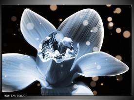 Glas schilderij Iris   Blauw, Zwart