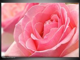 Foto canvas schilderij Roos | Roze