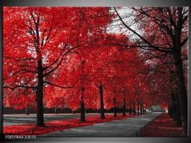 Glas schilderij Bomen | Rood, Grijs, Wit