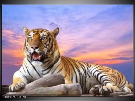 Foto canvas schilderij Tijger | Bruin, Wit, Blauw