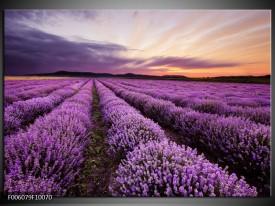 Glas schilderij Lavendel | Paars