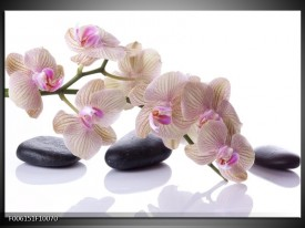 Glas schilderij Orchidee | Wit, Zwart, Roze