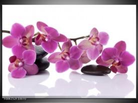 Glas schilderij Orchidee   Paars, Wit