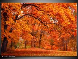 Foto canvas schilderij Herfst | Bruin, Oranje