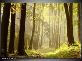 Foto canvas schilderij Natuur   Groen