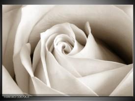 Glas Schilderij Roos, Bloem | Crème , Sepia