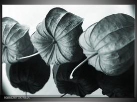 Glas Schilderij Bloem | Grijs, Groen, Zwart