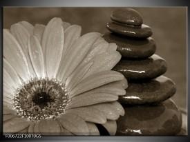 Glas Schilderij Bloem, Stenen | Sepia