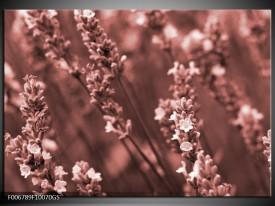 Glas Schilderij Bloemen, Lente | Bruin, Rood