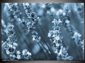 Glas Schilderij Bloemen, Lente | Blauw, Grijs