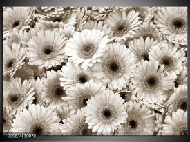 Canvas Schilderij Gerbera, Bloemen | Sepia