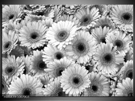Glas Schilderij Gerbera, Bloemen   Zwart, Grijs