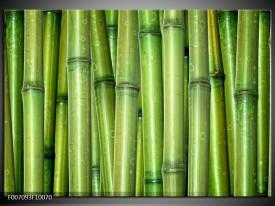 Canvas Schilderij Bamboe, Natuur | Groen