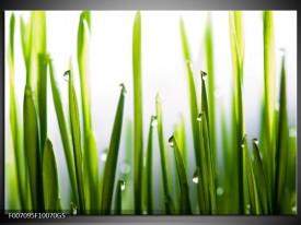 Glas Schilderij Gras, Natuur | Groen, Geel, Wit