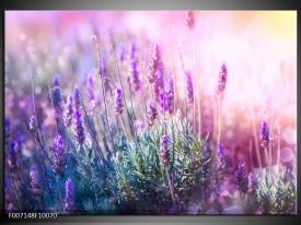 Canvas Schilderij Lavendel, Landelijk | Paars, Crème, Roze