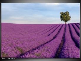 Canvas Schilderij Lavendel, Landelijk | Paars, Blauw, Groen