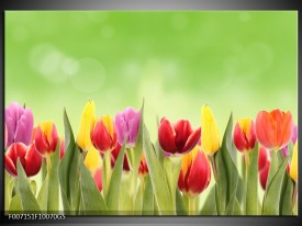 Glas Schilderij Tulpen, Bloemen | Groen, Rood, Geel