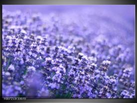 Canvas Schilderij Lavendel, Landelijk   Paars, Blauw