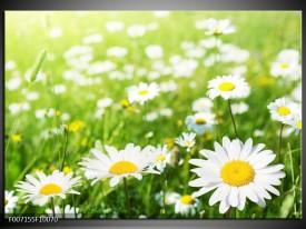 Canvas Schilderij Madeliefje, Bloemen   Groen, Wit, Geel