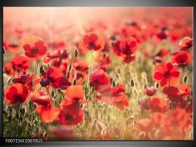 Glas Schilderij Klaproos, Bloemen | Rood, Bruin
