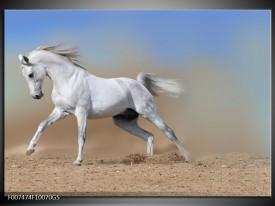 Glas Schilderij Paard, Dieren   Crème , Blauw, Wit