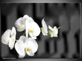 Canvas Schilderij Orchidee, Bloemen   Zwart, Wit