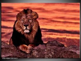Glas Schilderij Wilde Dieren | Oranje, Bruin