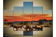 OP VOORRAAD Foto canvas schilderij Olifant | 100x70cm 5pcs | F002631