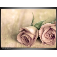 Foto canvas schilderij Roos | Groen, Creme