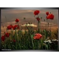 Foto canvas schilderij Klaproos | Rood, Groen, Grijs