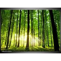 Foto canvas schilderij Natuur | Groen, Geel